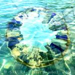 舞 -SAKURA-